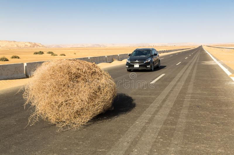 A car stopped by a giant tumbleweed on a highway with sandy dunes, between Bahariya oasis and Farafra, Western Desert of Egypt. stock images