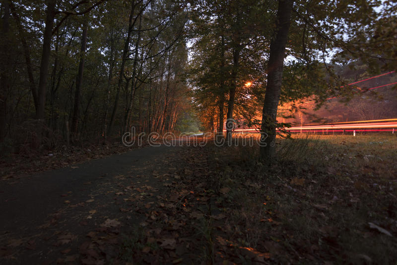 Car tail light trails in beautiful autumn colored forest royalty free stock photos