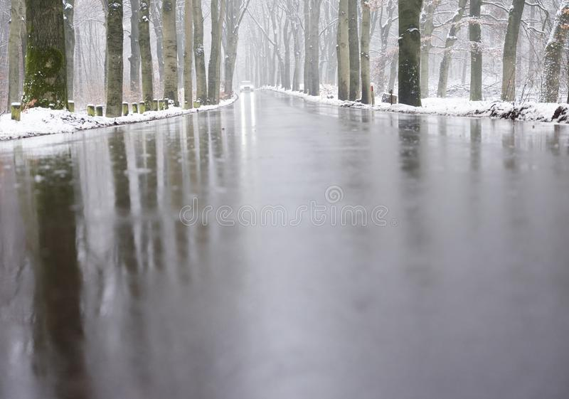 Car on tarmac road through snow forest in dutch winter near austerlitz and utrecht in holland stock photos