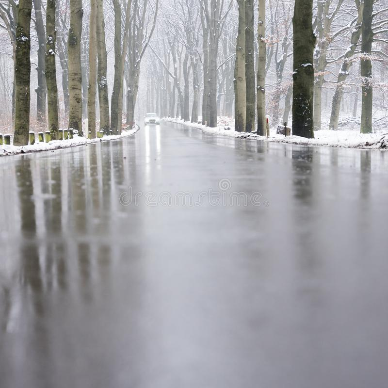 Car on tarmac road through snow forest in dutch winter near austerlitz and utrecht in holland. Car on tarmac road and reflection in wet surface through snow royalty free stock images