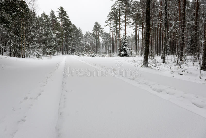 Car tire tracks on winter road. In deep snow in lonely forest stock image