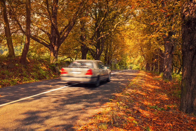 Car travel. Autumn car travel. Road with old trees with red leaves. Car blurred motion royalty free stock image