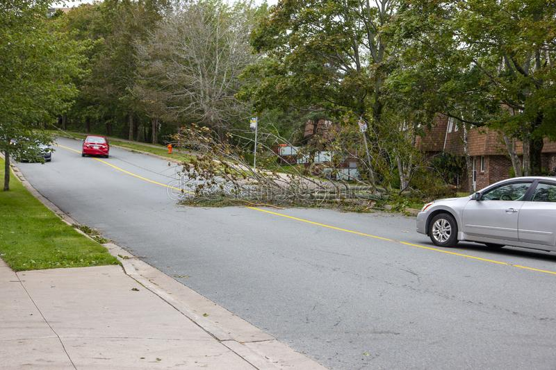 Car waiting to pass power line after Hurricane Dorian royalty free stock image
