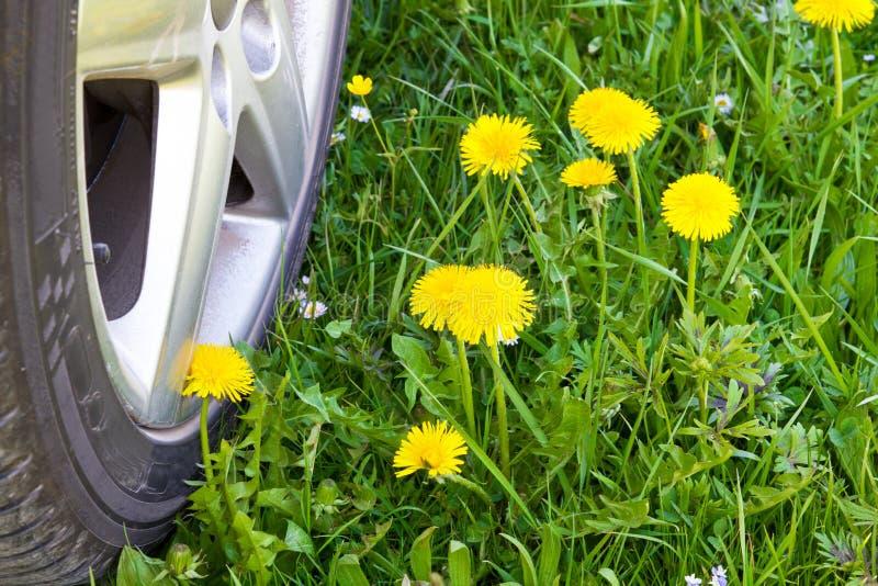 Car wheel crossing a spring meadow. With dandelion stock photos