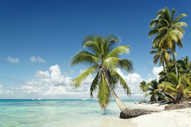 Caraïbisch strand stock fotografie