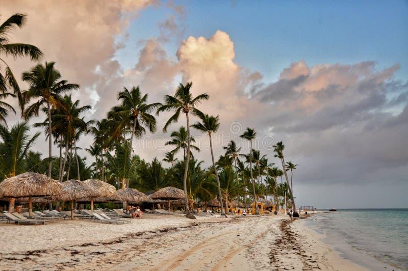 Caraïbisch strand met heel wat palmen en wit zand stock fotografie