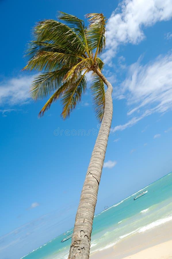 Caraïbisch strand met palm en wit zand stock fotografie
