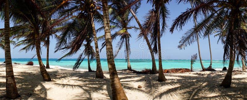 Caraïbisch Strand met Palmen op San Blas Islands tussen Panama en Colombia stock foto's