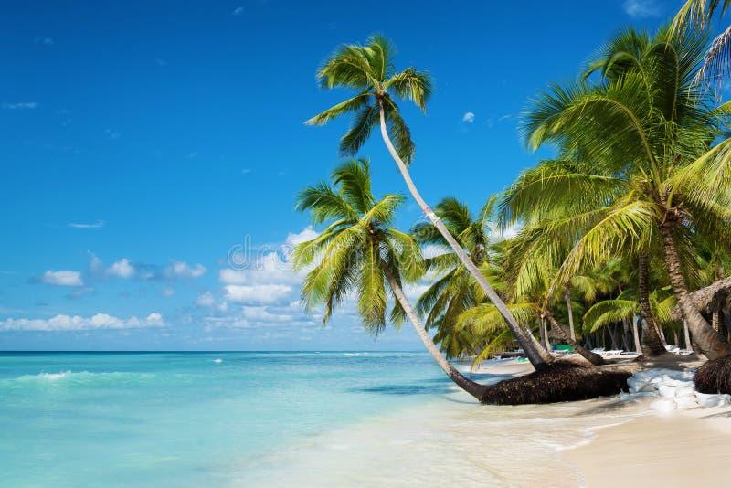Caraïbisch strand in Saona-eiland, Dominicaanse Republiek stock foto's