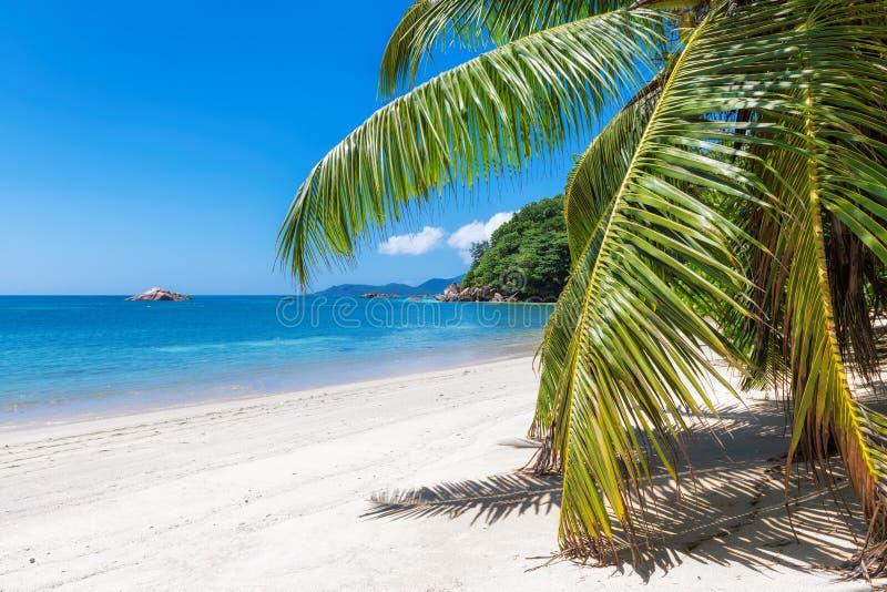 Caraïbisch zonnig strand met palm op wit zand stock afbeelding