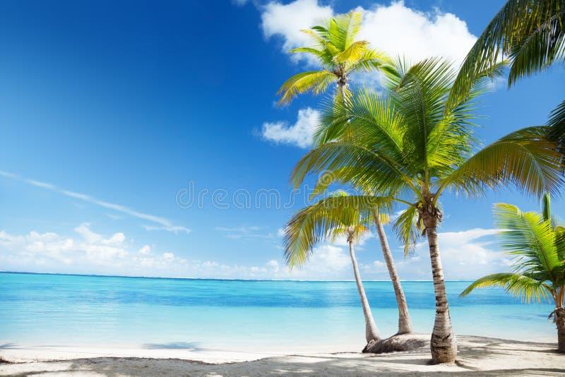 Caraïbische overzees en palmen royalty-vrije stock afbeelding