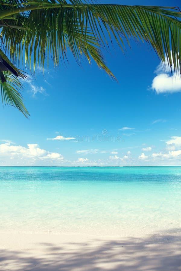 Caraïbische overzees en palmen royalty-vrije stock afbeeldingen