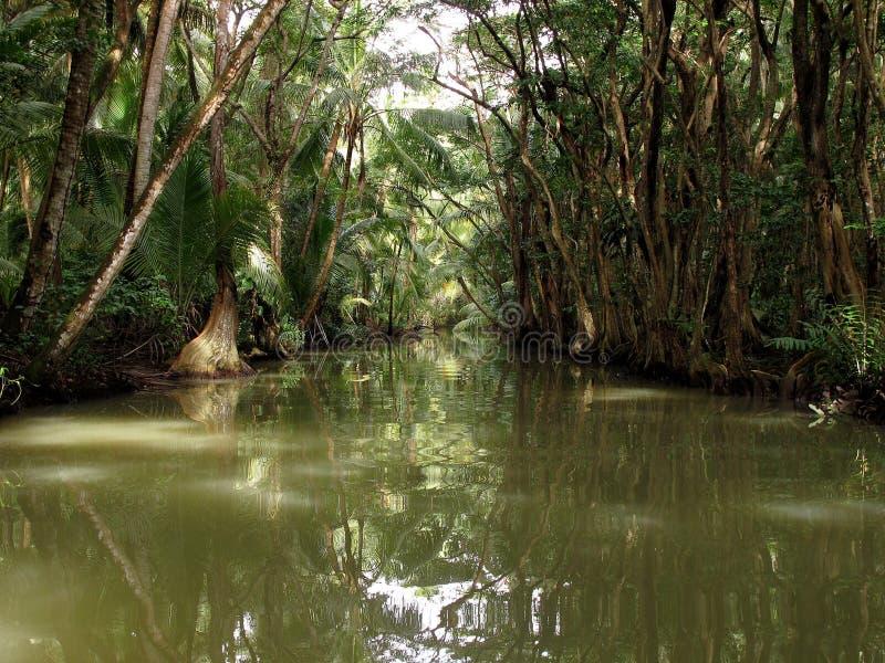 Caraïbische rivier in Dominica Island royalty-vrije stock afbeelding