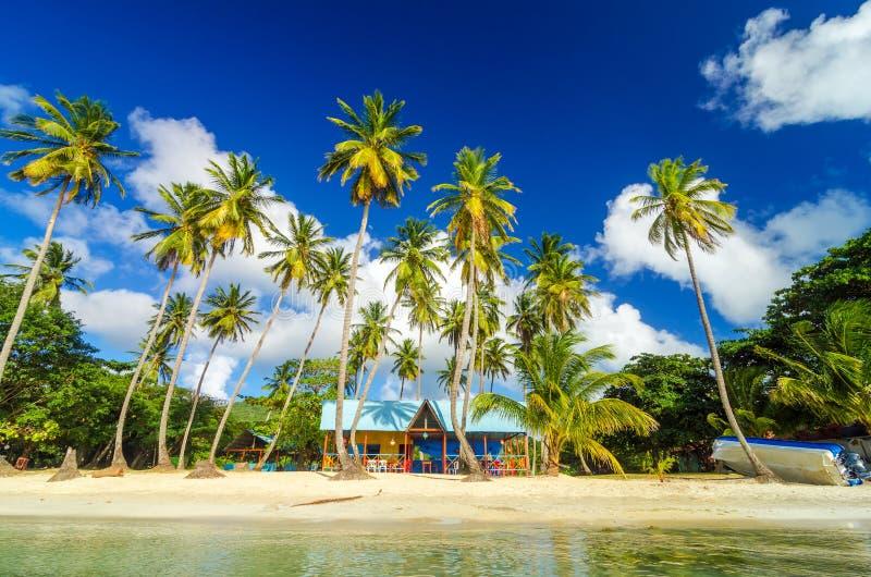 Caraïbische Strandkeet stock foto's