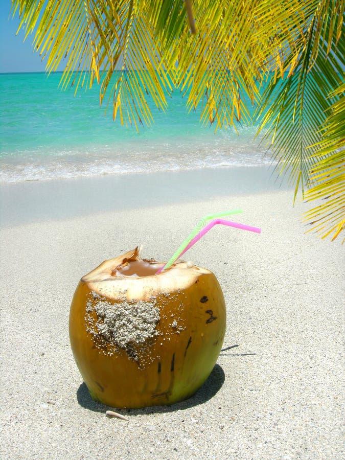 Caraïbische strandkosnoot en palm stock afbeelding