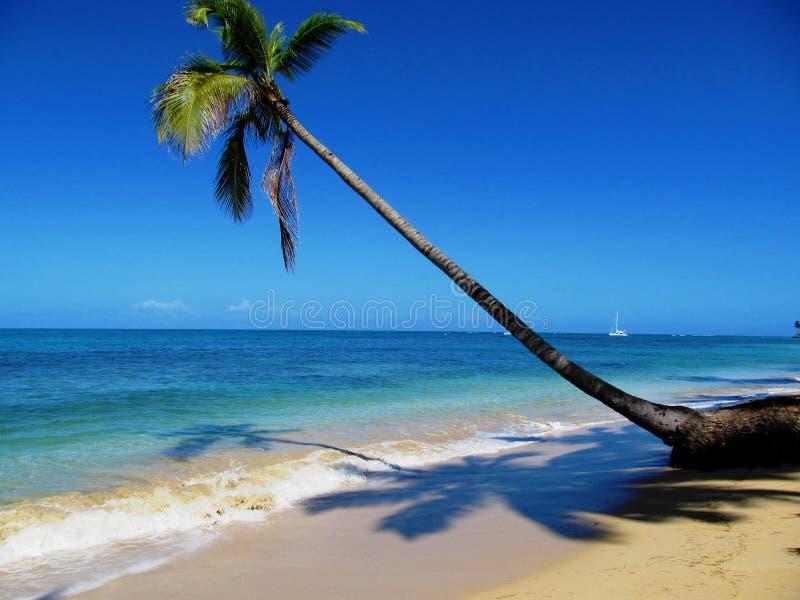 Caraïbische strandpalm stock afbeelding