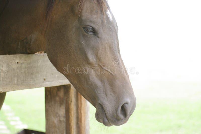 Cara ascendente cercana del caballo foto de archivo