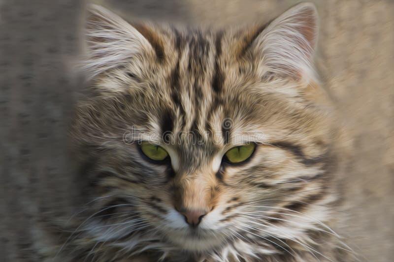 Cara ascendente cercana del gatito rayado fotografía de archivo