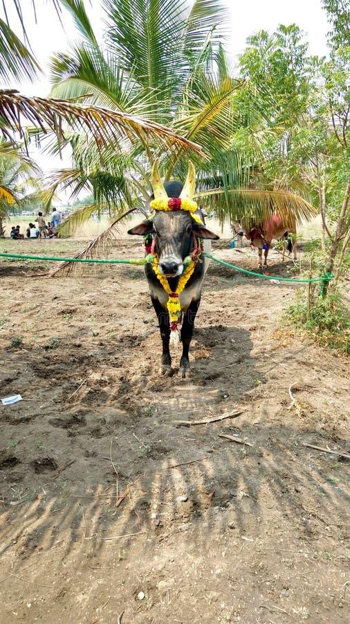 Cara de dios de los granjeros del Tamil imagen de archivo libre de regalías