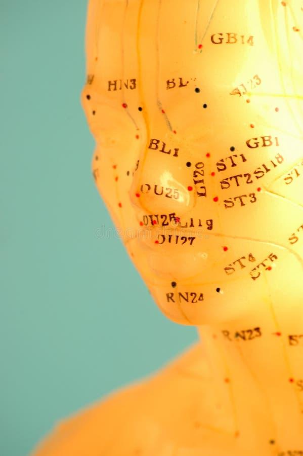 Cara de la acupuntura foto de archivo