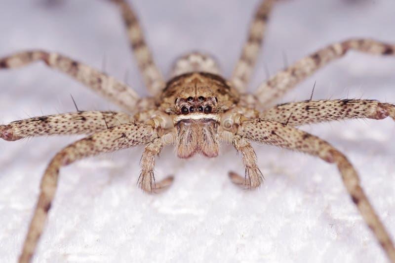 Cara de la araña imágenes de archivo libres de regalías