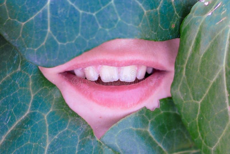 A cara de um ângulo coberto pelas folhas verdes imagem de stock royalty free