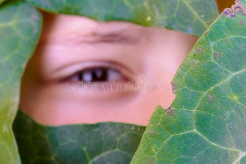 A cara de um ângulo coberto pelas folhas verdes imagem de stock