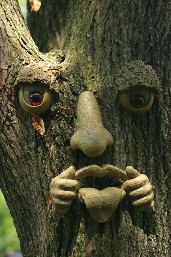 Cara del árbol imagen de archivo