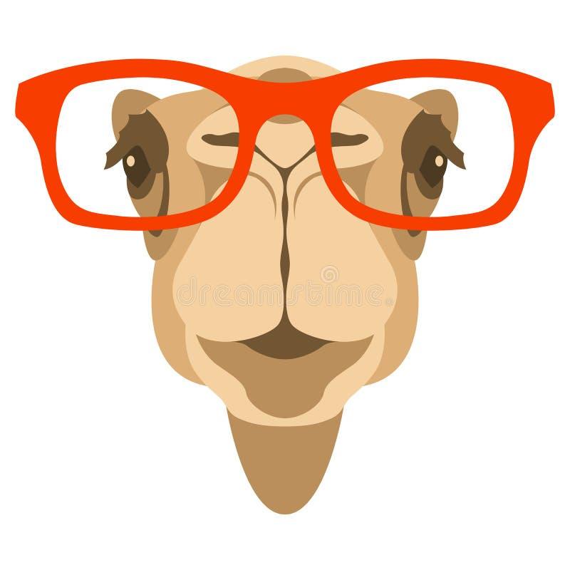 Cara do camelo na parte dianteira da ilustração do vetor dos vidros ilustração royalty free