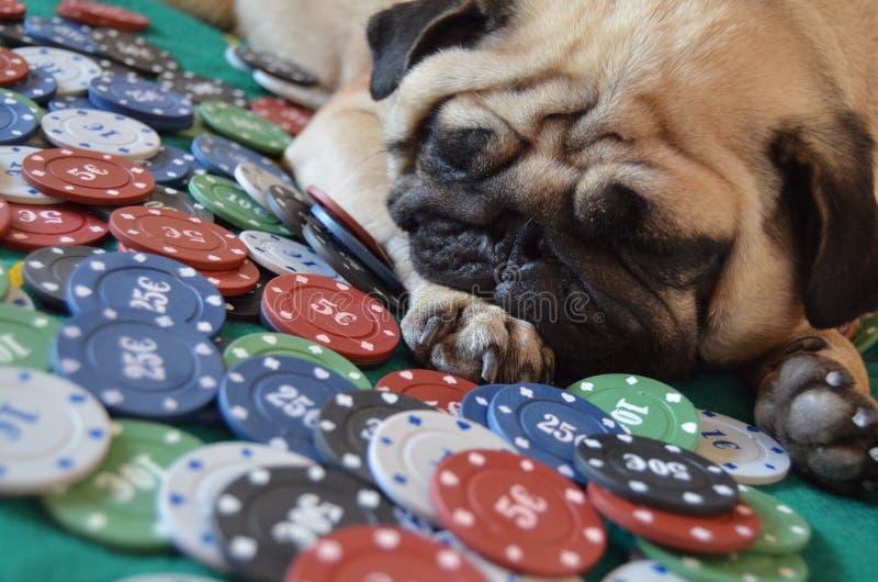 A cara do pôquer foto de stock royalty free