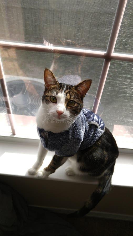 Cara do tempo da imagem do gato foto de stock royalty free