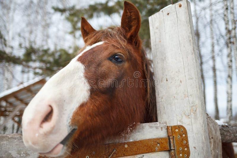 Cara engraçada do cavalo em um dia de mola ensolarado foto de stock royalty free