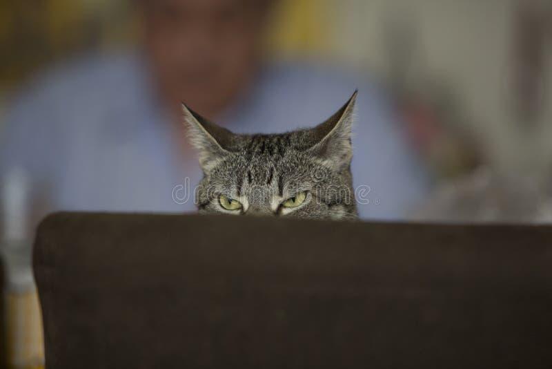 Cara engraçada do gato que levanta à câmera fotos de stock
