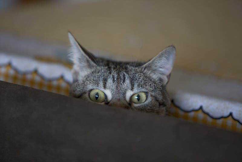 Cara engraçada do gato que levanta à câmera fotos de stock royalty free