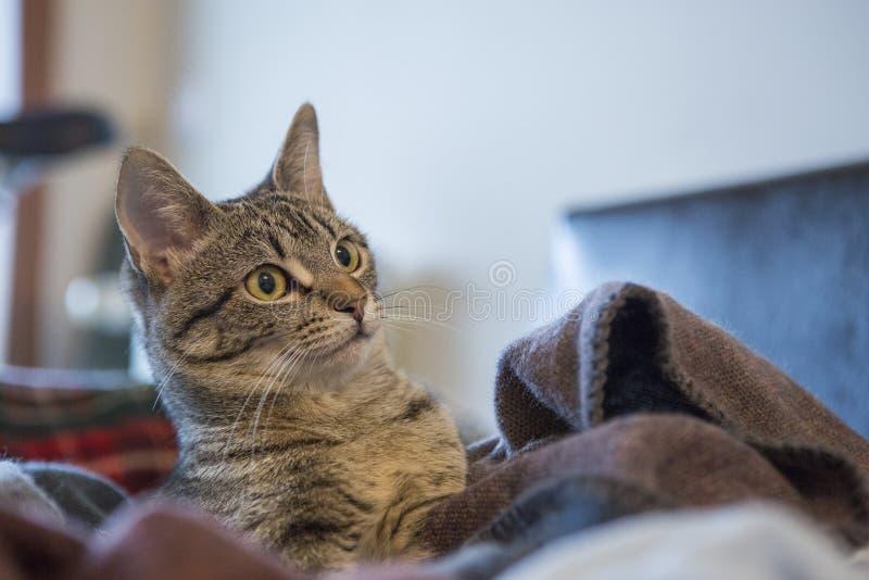 Cara engraçada do gato que levanta à câmera imagens de stock royalty free