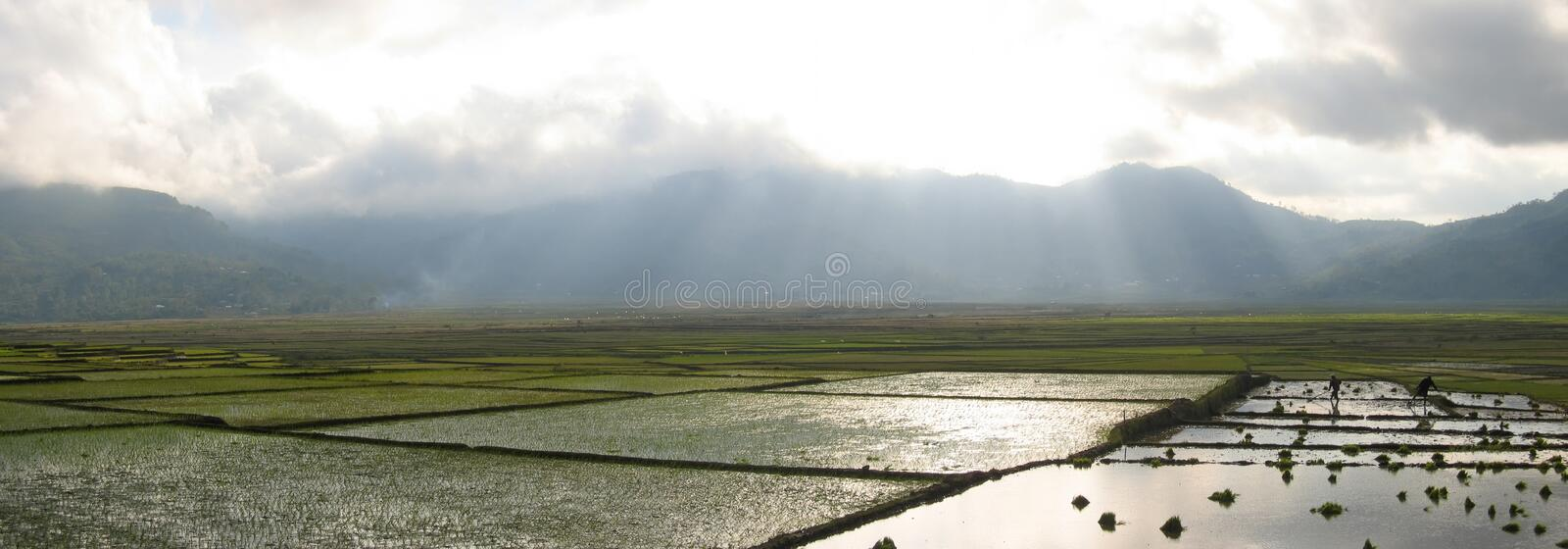 Cara ricefields with sunlight stock image