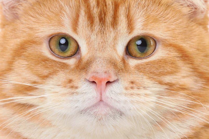 Cara roja del gato fotografía de archivo
