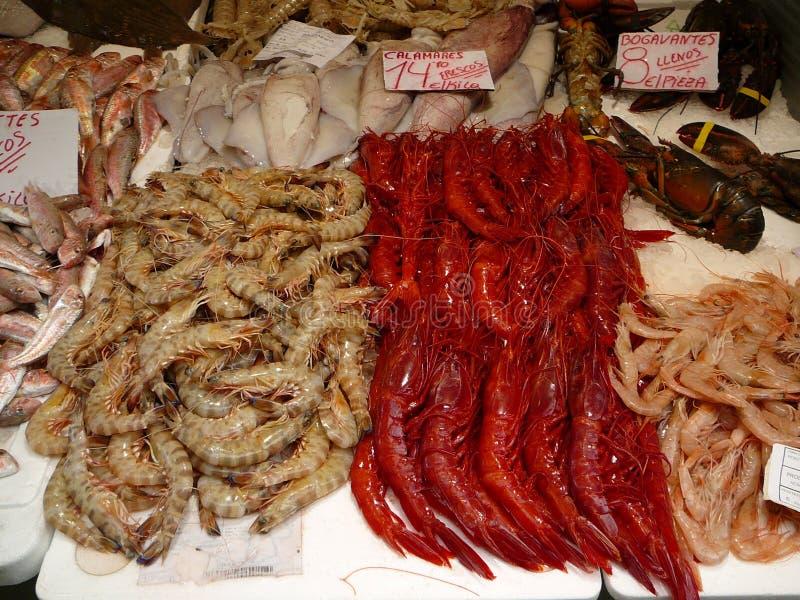 Carabineros prawns stock photo