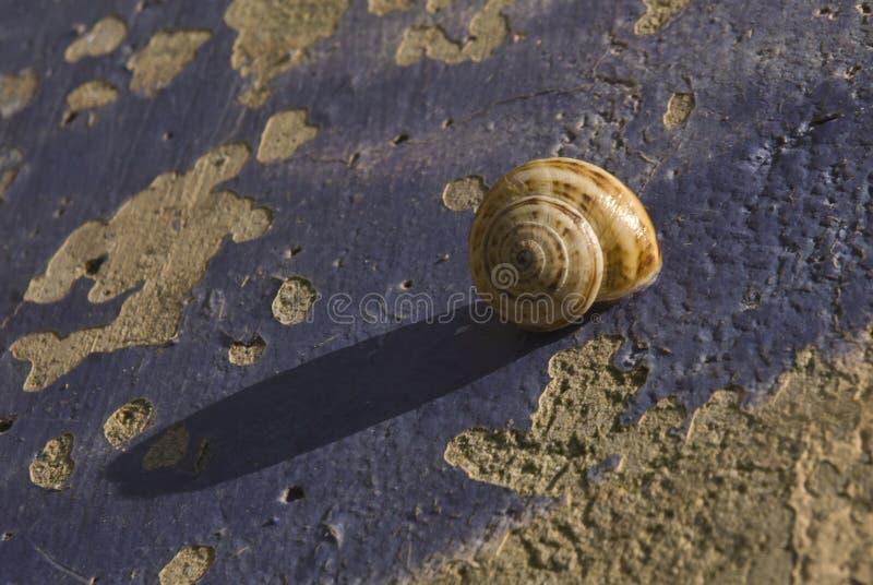 Caracol foto de archivo libre de regalías
