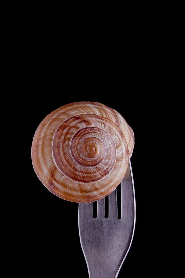 Download Caracol Adobado En La Bifurcaci?n Imagen de archivo - Imagen de alimento, escargot: 41915433