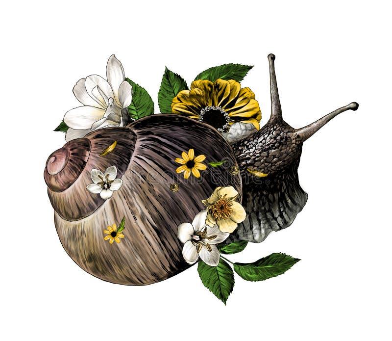 Caracol adornado con la opinión superior de arrastre de las flores y de las hojas libre illustration