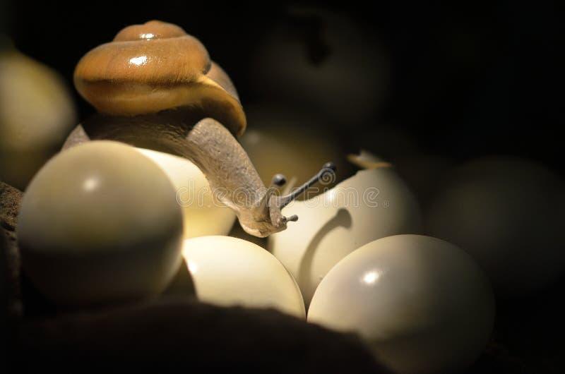 Caracol & ovos imagem de stock