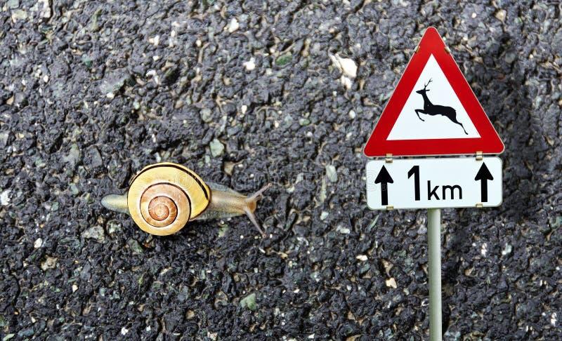 Caracol com cruzamento dos animais selvagens de sinal do shell e de estrada fotografia de stock royalty free