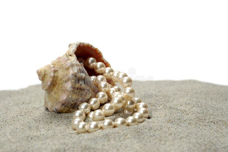Caracol de la aguas poco profundas con la perla imagenes de archivo