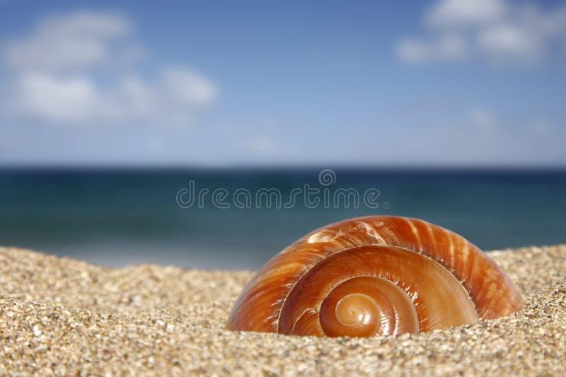 Caracol de la playa fotos de archivo libres de regalías