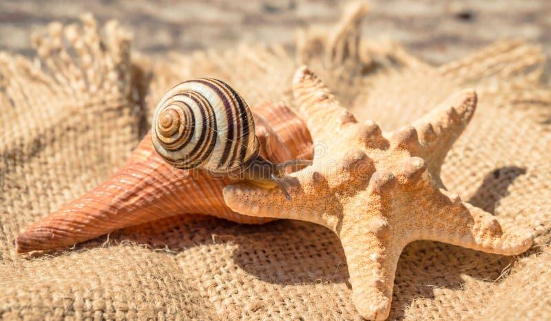 Caracol de tierra lindo El verano es los recuerdos marinos fotos de archivo libres de regalías