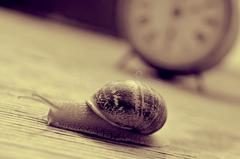Caracol e pulso de disparo de terra, no tom do sepia imagem de stock royalty free