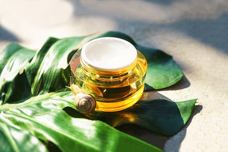 Caracol e um frasco do creme de pele na folha verde do monstera no fundo concreto foto de stock royalty free