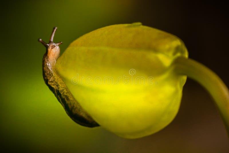 Caracol em uma flor foto de stock royalty free