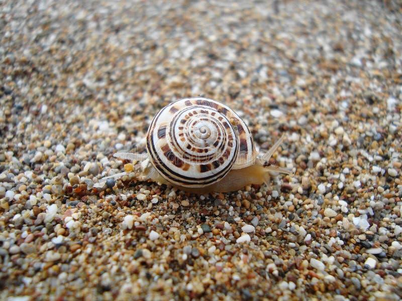 Caracol en la costa del mar imagen de archivo libre de regalías